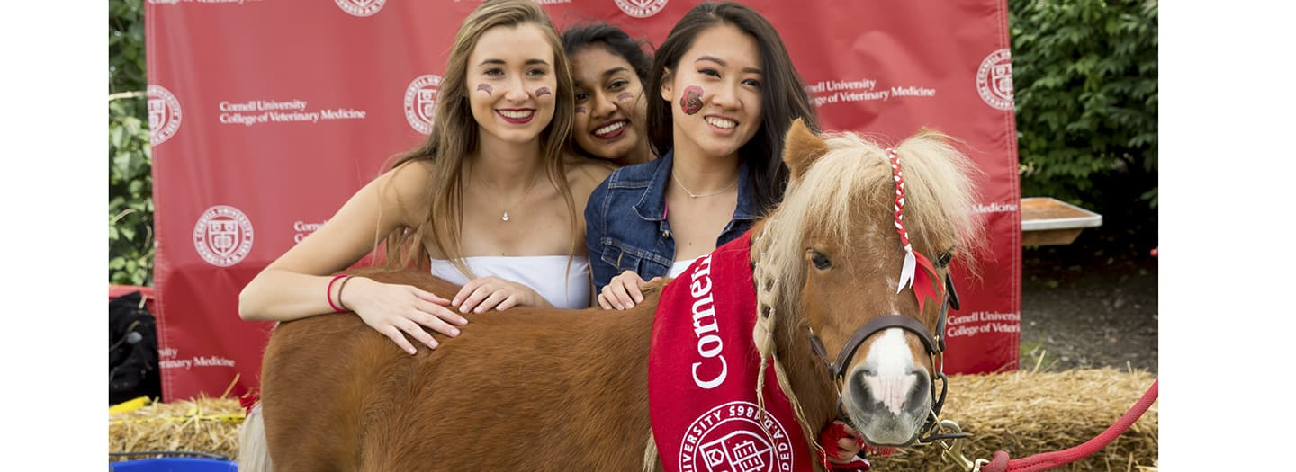 Photo of Mini Horse with Students