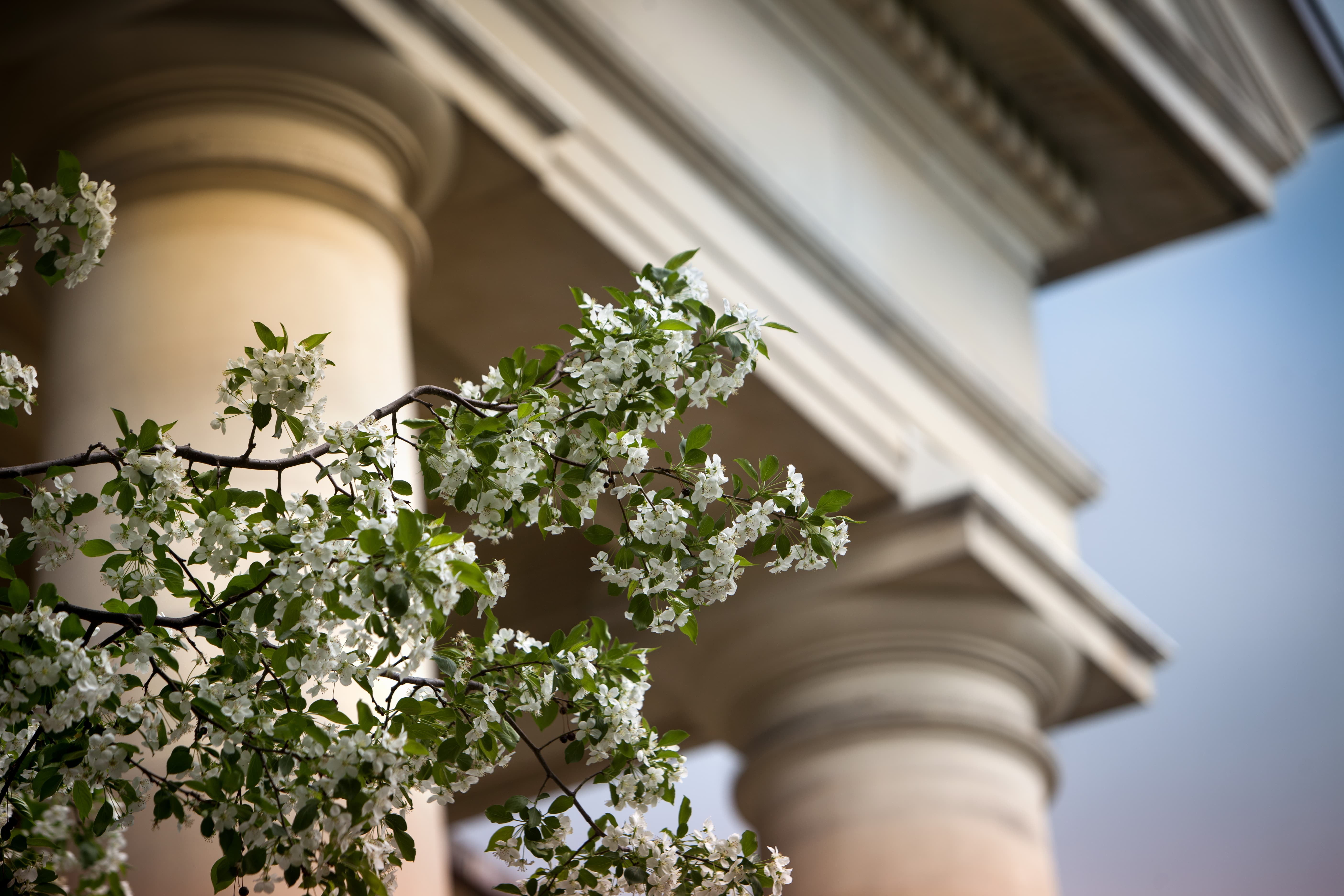 Pillars with flowers photo