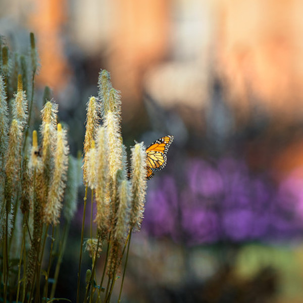 photograph of butterfly in focus with blurred garden background